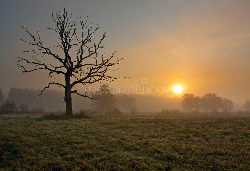 Mattina nebbiosa con l'albero fotografia stock libera da diritti