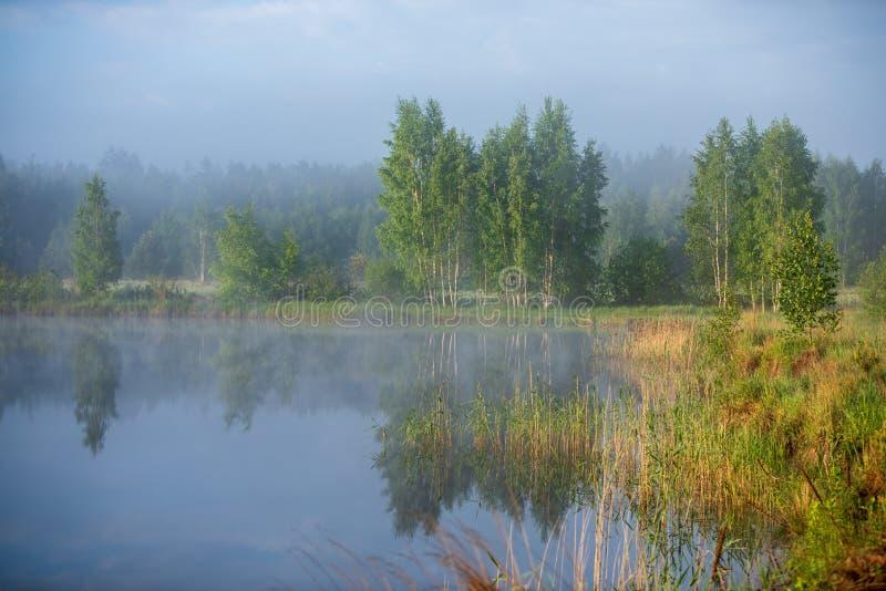 Mattina nebbiosa dal lago immagine stock
