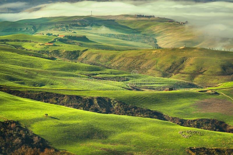 Mattina nebbiosa della Toscana, terreno coltivabile e campi verdi L'Italia fotografia stock libera da diritti