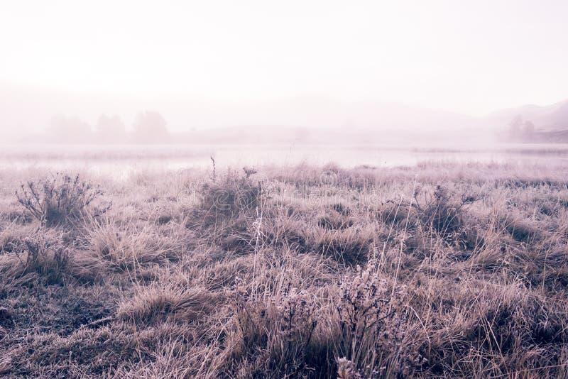Mattina nebbiosa di Arly sulla riva dello specchio del lago fotografie stock