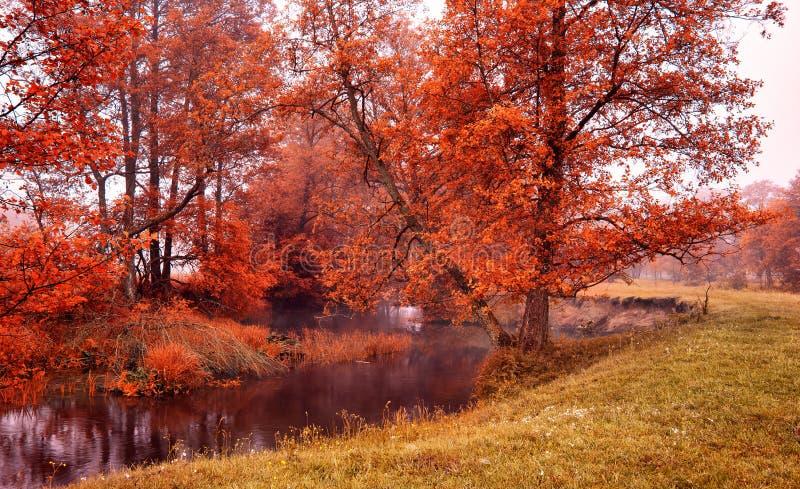 Mattina nebbiosa di autunno nell'insenatura della foresta fotografia stock libera da diritti