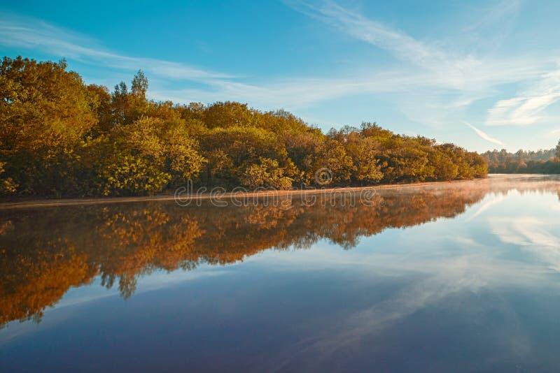 Mattina nebbiosa di autunno Scena di alba di autunno Alberi di Alden sulla riva nebbiosa Flusso nebbioso di autunno fotografia stock