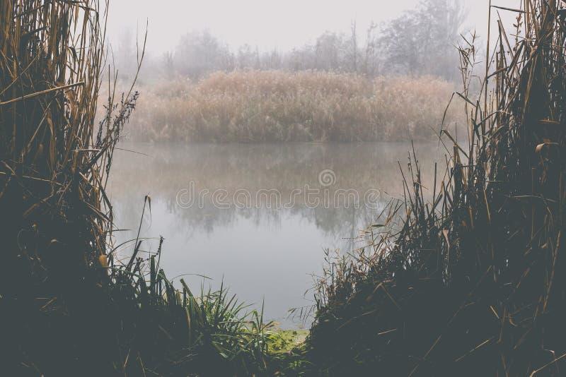 Mattina nebbiosa di autunno sul fiume Brina sulle piante fotografie stock