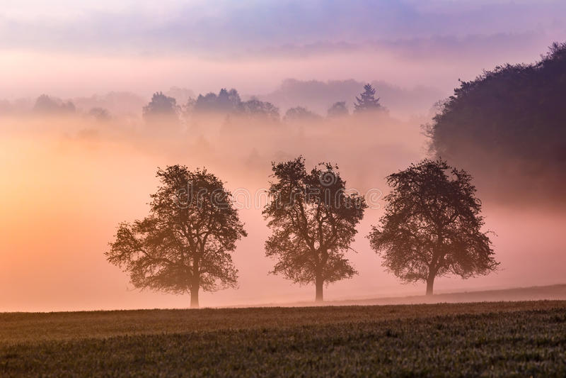 Mattina nebbiosa di estate fotografie stock libere da diritti