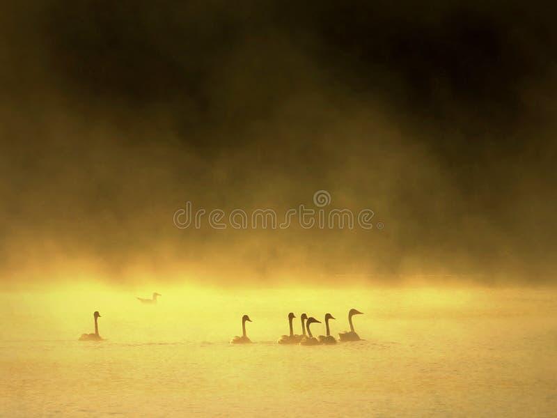 Mattina nebbiosa di estate, atmosfera magica Molti uccelli fotografia stock libera da diritti