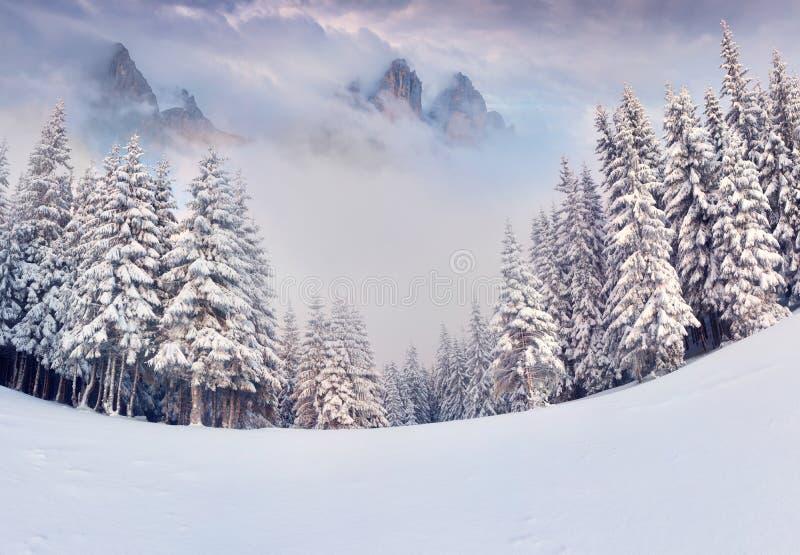 Mattina nebbiosa di inverno in montagne fotografia stock libera da diritti