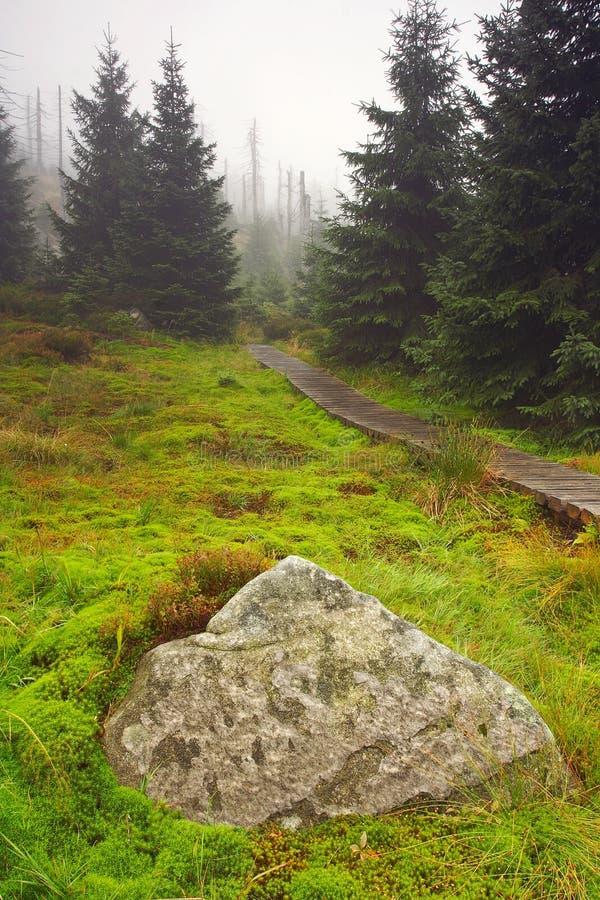 Mattina nebbiosa in foresta guasto fotografie stock libere da diritti