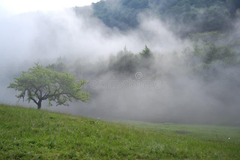 Mattina nebbiosa in montagne fotografia stock libera da diritti