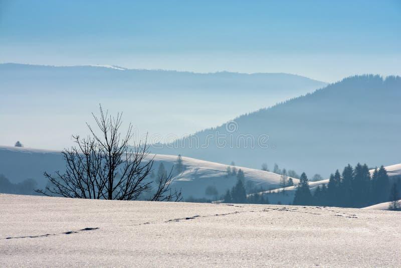 Mattina nebbiosa in montagne di inverno immagini stock libere da diritti