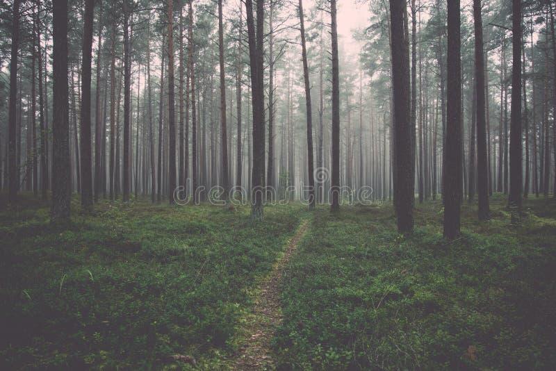 Mattina nebbiosa nel legno fotografia stock