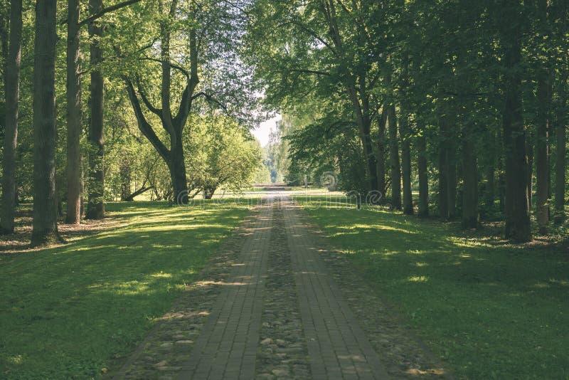 Mattina nebbiosa nel legno foresta con i tronchi di albero - annata fi fotografie stock libere da diritti