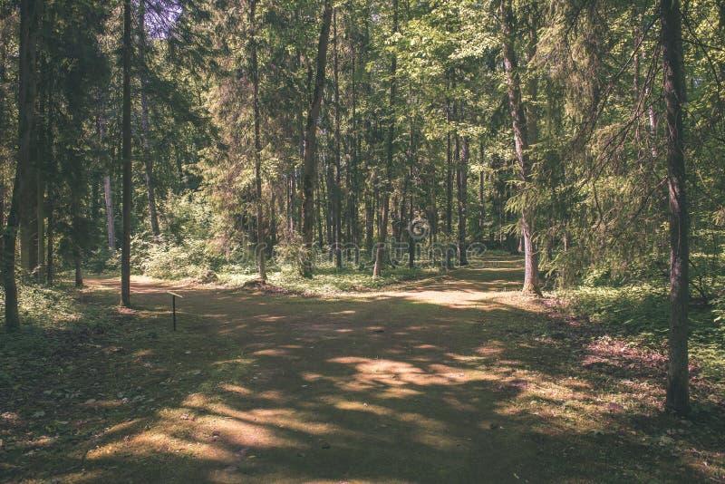 Mattina nebbiosa nel legno foresta con i tronchi di albero - annata fi fotografia stock libera da diritti