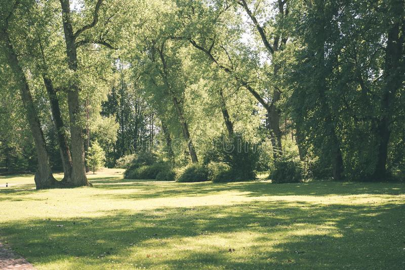 Mattina nebbiosa nel legno foresta con i tronchi di albero - annata fi fotografia stock
