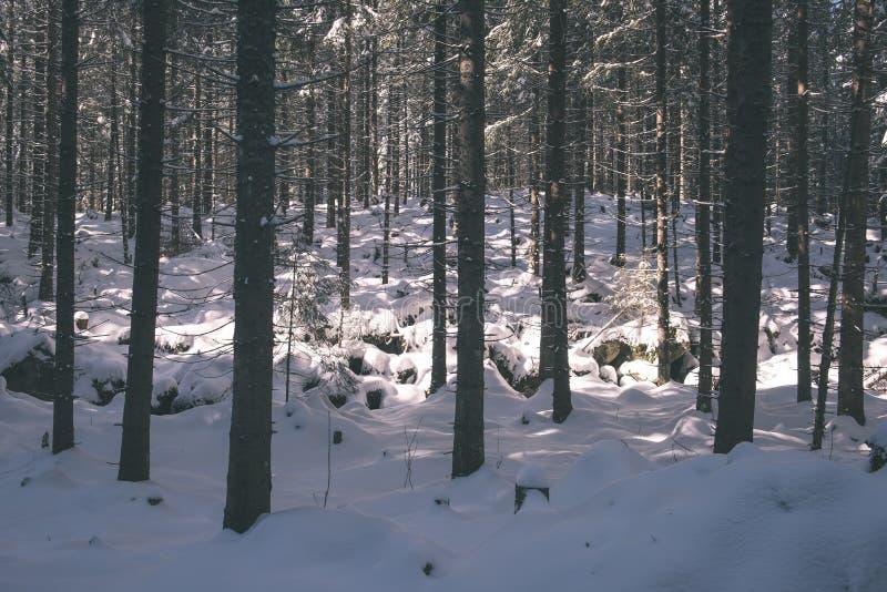 Mattina nebbiosa nel legno foresta con i tronchi di albero - annata fi immagini stock libere da diritti