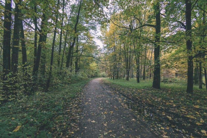 Mattina nebbiosa nel legno foresta con i tronchi di albero - annata con riferimento a fotografia stock