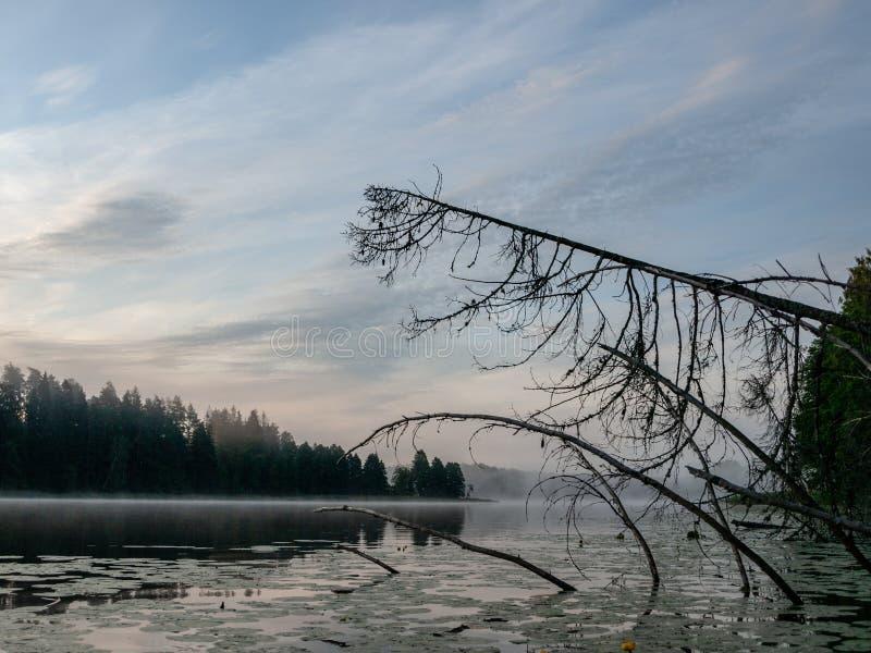mattina nebbiosa nell'area del lago fotografie stock libere da diritti
