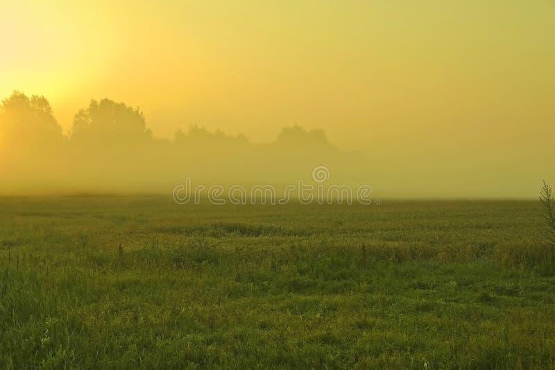 Mattina nebbiosa nell'ora legale fotografie stock