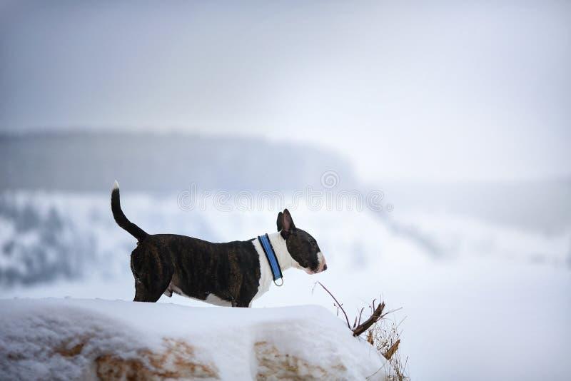 Mattina nebbiosa nella foresta e nel cane immagine stock libera da diritti