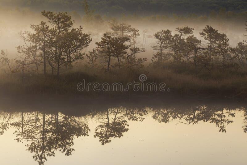 Mattina nebbiosa nella palude fotografia stock