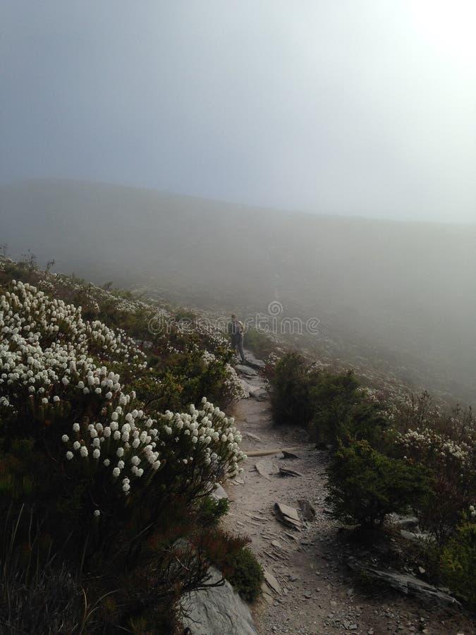 Mattina nebbiosa nelle gamme di Stirling immagini stock