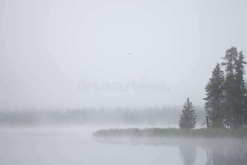 Mattina nebbiosa su un lago con gli alberi e le erbe distanti fotografia stock