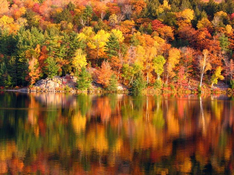 Mattina nel lago fotografia stock libera da diritti