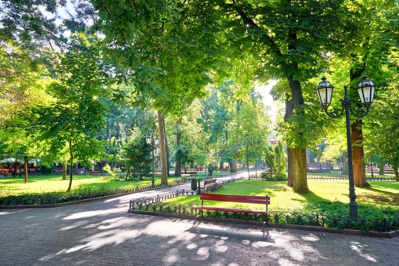 Mattina nel parco della città, nella luce solare luminosa ed in ombre, stagione estiva, bello paesaggio immagine stock libera da diritti