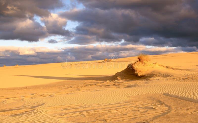 Mattina nelle dune fotografia stock