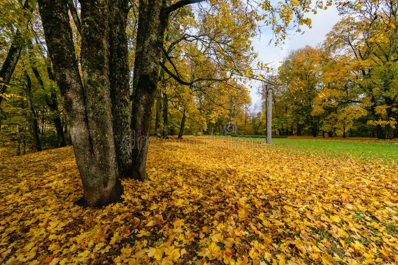 mattina soleggiata nel legno foresta con i tronchi di albero fotografia stock