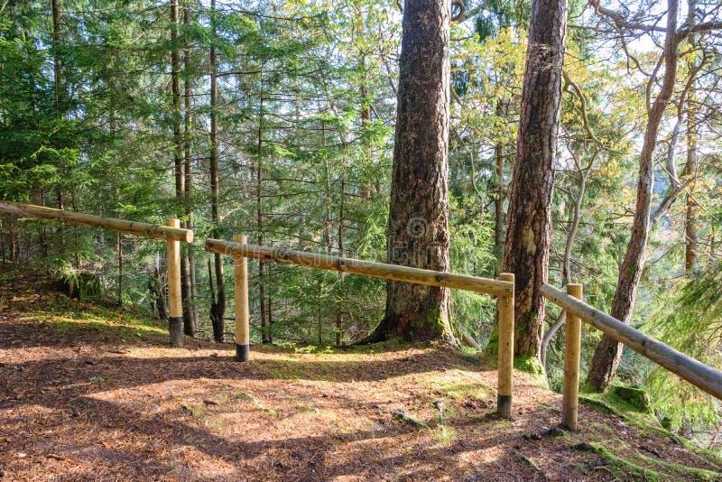 mattina soleggiata nel legno foresta con i tronchi di albero immagini stock libere da diritti