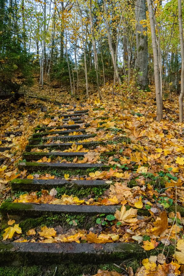 mattina soleggiata nel legno foresta con i tronchi di albero fotografie stock libere da diritti