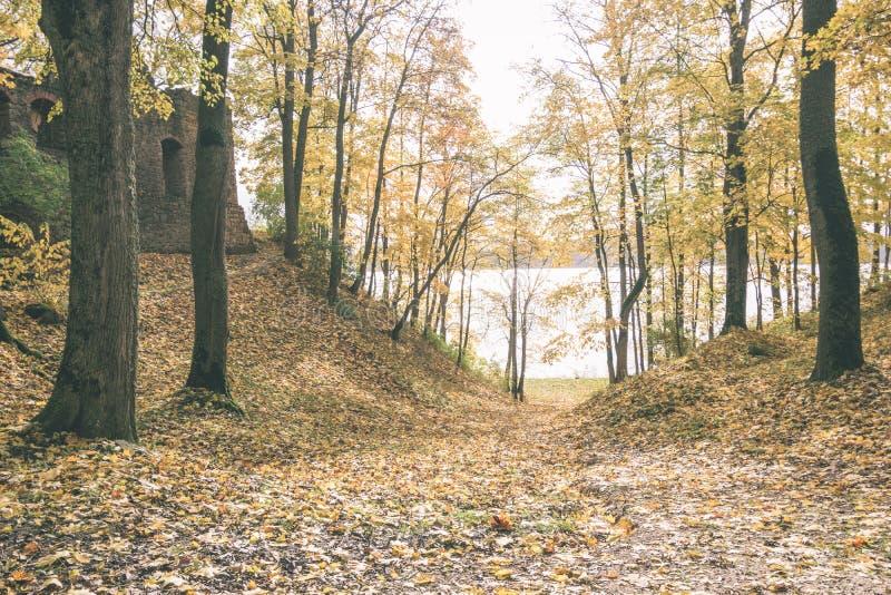 mattina soleggiata nel legno foresta con i tronchi di albero - annata con riferimento a fotografia stock libera da diritti