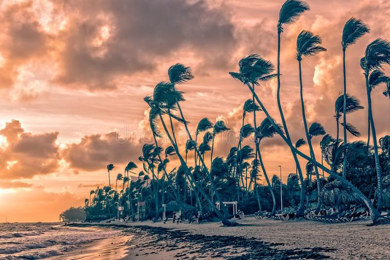 Mattina sulla spiaggia immagini stock