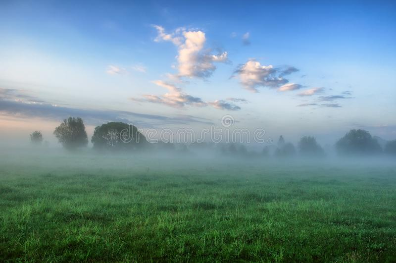 Mattina un'alba nebbiosa in un prato pittoresco Raggi di Sun fotografia stock