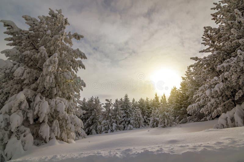 Mattina variopinta di inverno nelle montagne ad alba fotografia stock