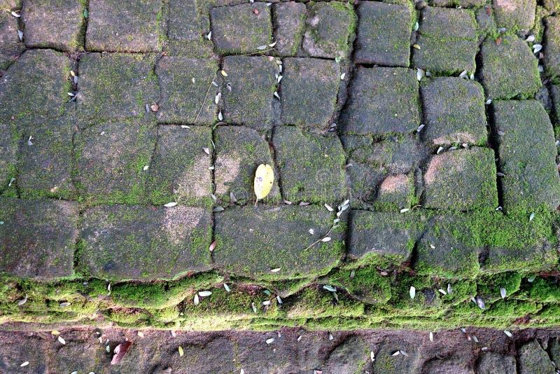Mattoni antichi dalle rovine di Sigiriya fotografia stock libera da diritti