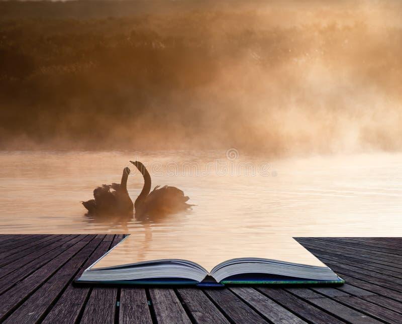 Download Matująca Para łabędź Na Mglistym Mgłowym Jesieni Spadek Jeziorze Obraz Stock - Obraz złożonej z wyobraźnie, arte: 28958355