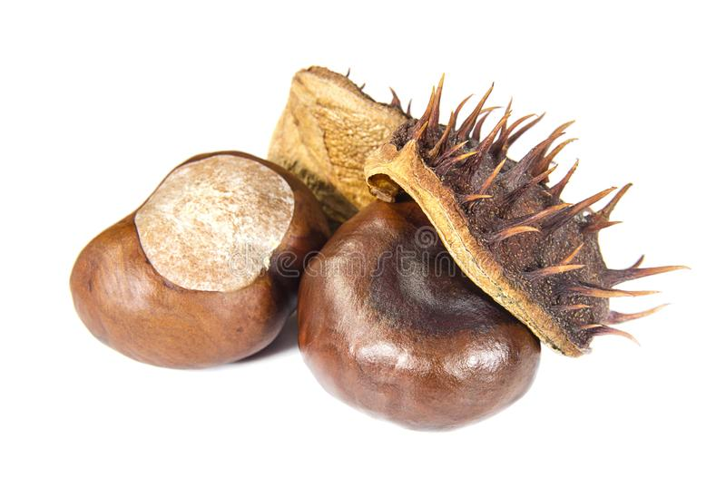 Mature chestnuts in brown peel on white background stock photo