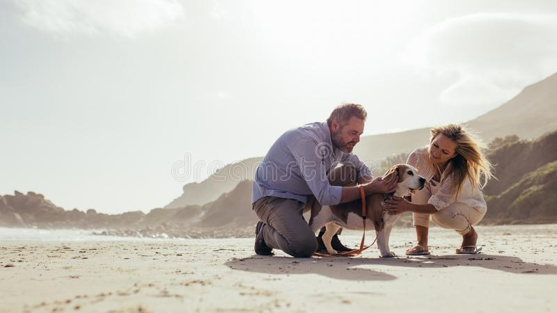Mature couple with pet dog on the beach royalty free stock photos