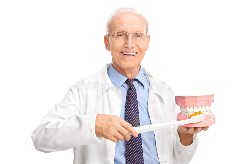 Mature dentist holding large toothbrush and a denture royalty free stock images