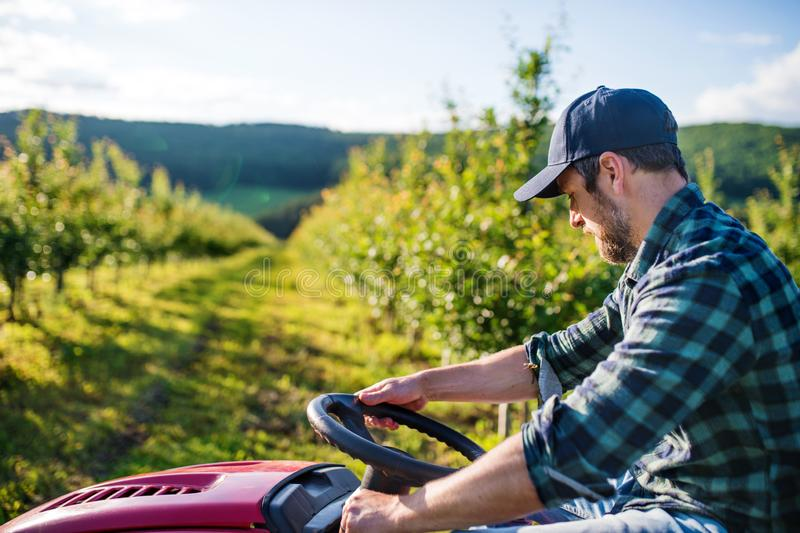 A mature farmer driving mini tractor outdoors in orchard. royalty free stock image