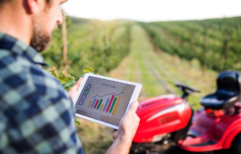 A mature farmer with tablet standing by mini tractor outdoors in orchard. stock image