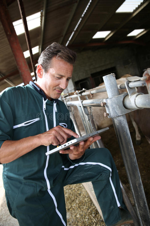 Mature farmer using tablet in barn royalty free stock photo