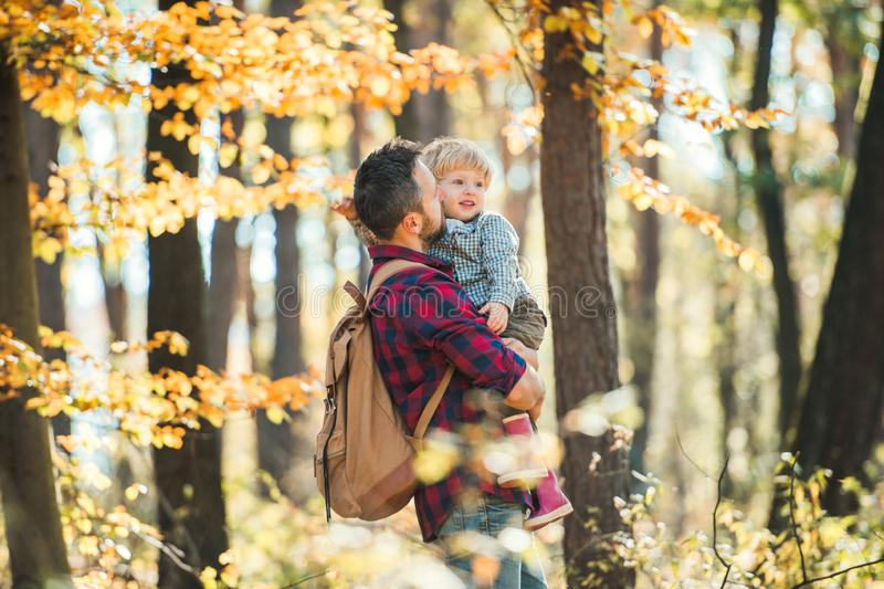 A mature father holding a toddler son in an autumn forest, walking. A mature father holding a toddler son in an aun forest on a sunny day, walking stock images