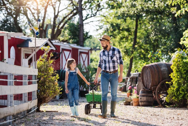 A father with small daughter walking outdoors on family farm. royalty free stock photo
