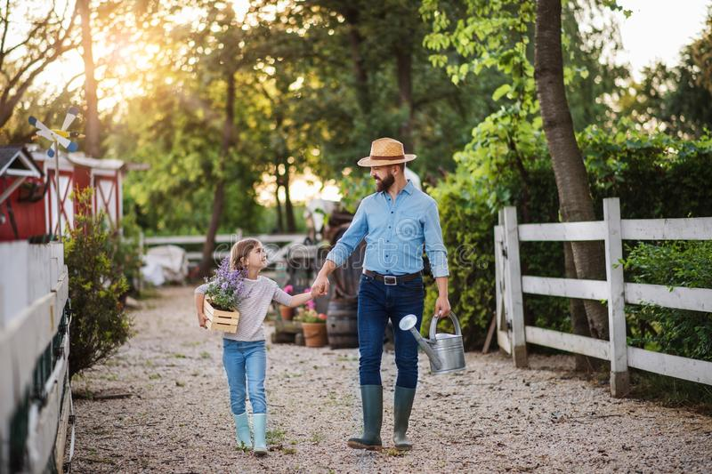 A father with small daughter walking outdoors on family farm, holding hands. stock photos