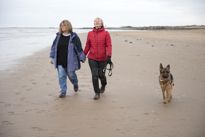 Mature female couple laughing and holding hands walking along the beach. On a cold day stock photo