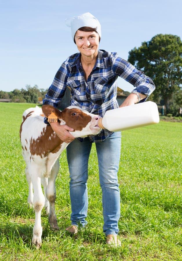 Female employee feeding newborn calf on grass pasture royalty free stock photography