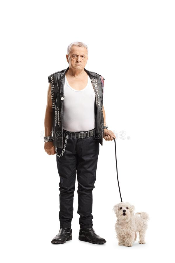 Mature grumpy punker standing with a maltese poodle dog. Full length portrait of a mature grumpy punker standing with a maltese poodle dog isolated on white royalty free stock photography