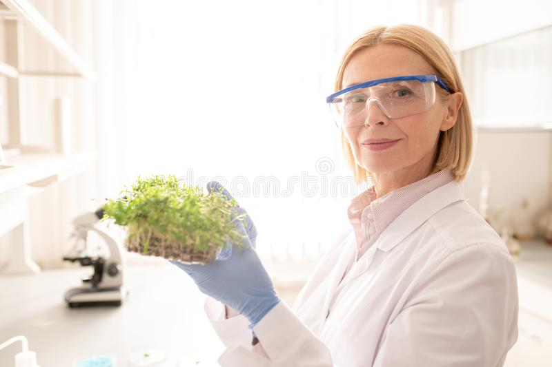 Mature lady exploring seedling. Content confident mature lady with short blond hair holding seedling and looking at camera while exploring seedling in laboratory stock photo